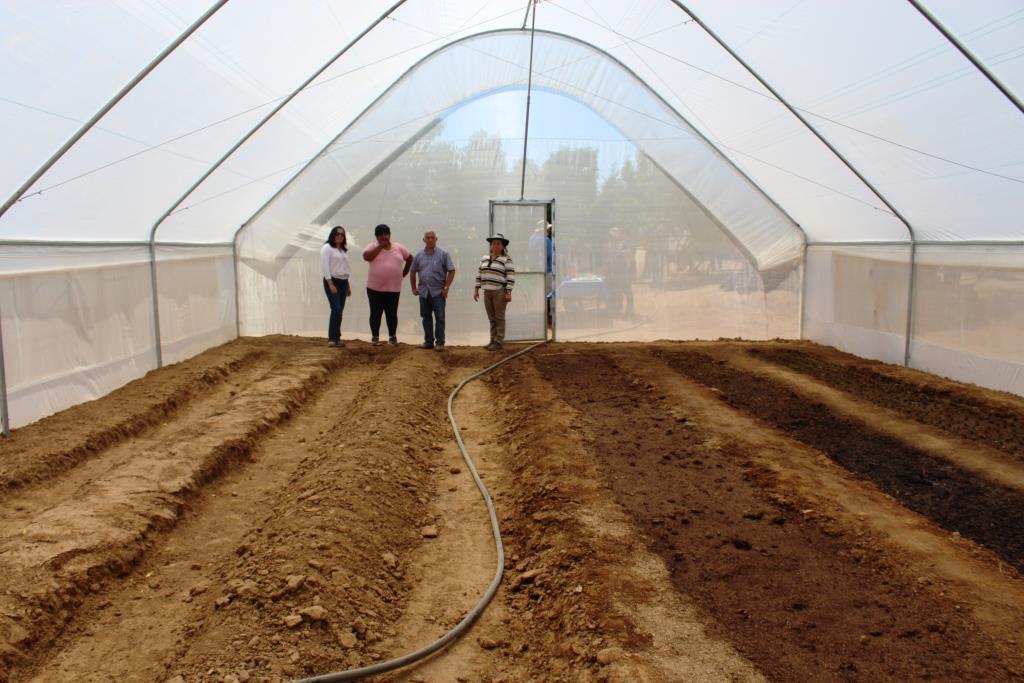 Floricultora Combarbalina aumenta productividad en un 200% gracias a invernadero israelita.